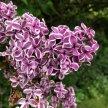 Edimentals: ornamental plants you can eat! image