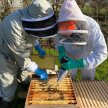 Honey Harvesting Course with Liam McGarry image