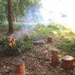 Weekend Woodland Workshop image