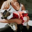Family Christmas Goat Yoga & Jammies 2019 image