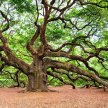Trees with Tales to Tell - Cultural Heritage and Britain's Ancient and Notable Trees: Cemetery Park Online image