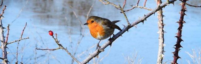 Big Garden Birdwatch at Valentines Park