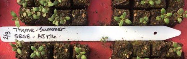 Soil Blocking: Ditch the Plastic