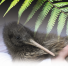 Kiwi Saving Kiwi - London Fundraiser