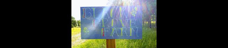 Black Grove Farm