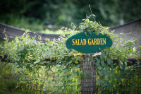 Keep 'Em Coming: Getting the Most From Your Garden image