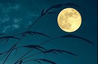 Turner Farm Full Moon Feast image