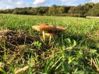 Norfolk, Hunstanton, Autumn Wild Food Foraging Course/Walk image