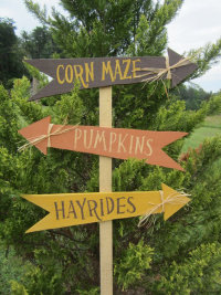 The Darnell Farms' Fall Harvest Experience image