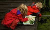 Pond Dipping image