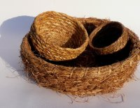 Wild Basketry image