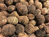 New York Nut Growers Association 2020 Fall Meeting image