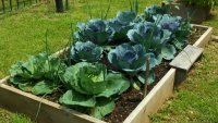 Building a Vegetable Garden Bed at Home: Growing In and Outside the Box image
