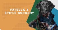 Patella and Stifle Workshop image