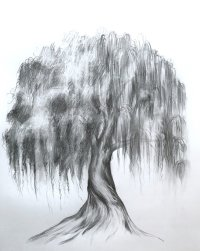 Draw a Willow Tree Brush Party - Online image
