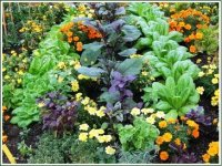 Companion Planting with Kate Cook image