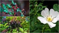 Hedgerow Medicine & Foraging Part 2 image